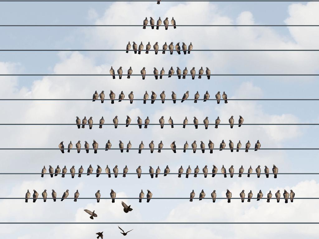 pirámide de pájaros